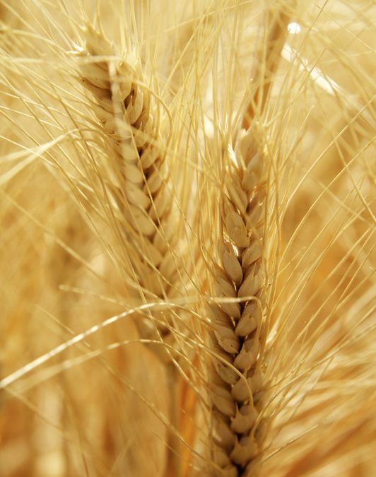 Eating Gluten Can Contribute to Leaky Gut